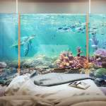 the floating seahorse tzar edition bedroom